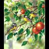 """Ткань с рисунком для вышивания бисером """"Птицы на яблоне"""" """"МП Студия"""""""