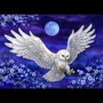 """Канва с рисунком для вышивания гобелена """"Сова в лунном свете"""" 60х80см """"Grafitec"""" (Греция)"""
