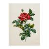"""Набор для вышивания """"Роза французская"""" """"Pierre Joseph Redoute"""" """"Lecien"""" (Япония)"""