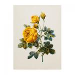 """Набор для вышивания """"Роза полушаровидная"""" """"Pierre Joseph Redoute"""" """"Lecien"""" (Япония)"""