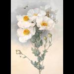 """Ткань с рисунком для вышивания лентами """"Белые цветы"""" """"Gamma"""""""