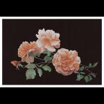 """Набор для вышивания """"Розы"""" """"Thea Gouverneur"""""""