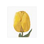 """Набор для вышивания """"Жёлтый тюльпан Дарвинов гибрид"""" """"Thea Gourverneur"""""""