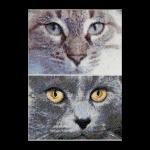 """Набор для вышивания """"Кошки Джек и Луна"""" """"Thea Gourverneur"""""""