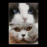 """Набор для вышивания """"Кошки Дымчатый и Синий"""" """"Thea Gourverneur"""""""
