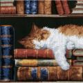 """Набор для вышивания """"Кот, спящий на книжной полке"""" """"Vervaco"""""""