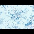 """Ткань для пэчворк (50x55см) 31360-70 из коллекции """"Rococo Sweet"""" """"Lecien"""" (Япония)"""