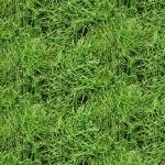 """Ткань для пэчворк (50x55см) 4801-419 из коллекции """"Nature"""" """"Stof"""" (Дания)"""