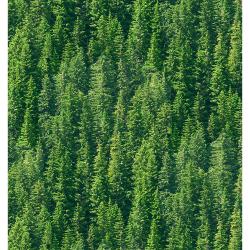 """Ткань для пэчворк (50x55см) 4801-424 из коллекции """"Nature"""" """"Stof"""" (Дания)"""