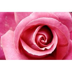 """Набор для картины стразами """"Бутон розы"""" """"Алмазная живопись"""""""