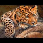 """Набор для картины стразами """"Леопард"""" """"Алмазная живопись"""""""