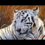 """Набор для картины стразами """"Белый тигр"""" """"Алмазная живопись"""""""