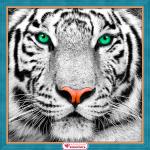 """Набор для картины стразами """"Портрет белого тигра"""" """"Алмазная живопись"""""""