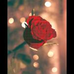 """Набор для картины стразами """"Роза для неё"""" """"Фрея"""""""