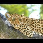 """Набор для картины стразами """"Леопард"""" """"Фрея"""""""