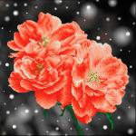"""Набор для картины стразами """"Абрикосовые розы"""" """"Фрея"""""""