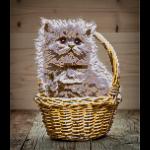 """Набор для картины стразами """"Котёнок в корзине"""" """"Фрея"""""""