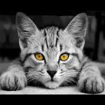 """Набор для раскрашивания """"Без кота и жизнь не та"""" 50х40см """"Фрея"""""""