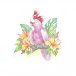 """Набор для раскрашивания цветными карандашами """"Австралийский розовый какаду"""" """"Фрея"""""""