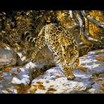 """Набор для картины стразами """"Леопарды"""" """"Паутинка"""""""
